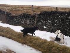 Jumping for snowballs up Mam Tor