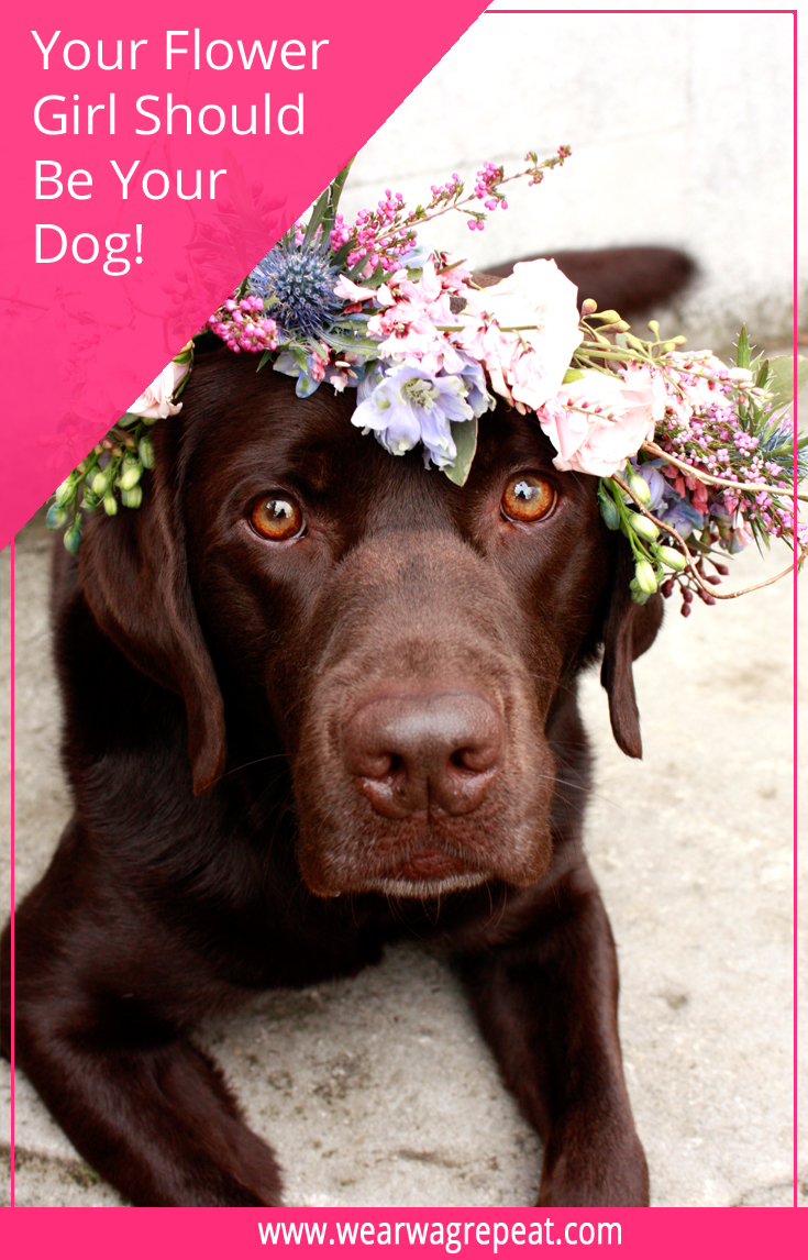 Your Flower Girl Should be Your Dog