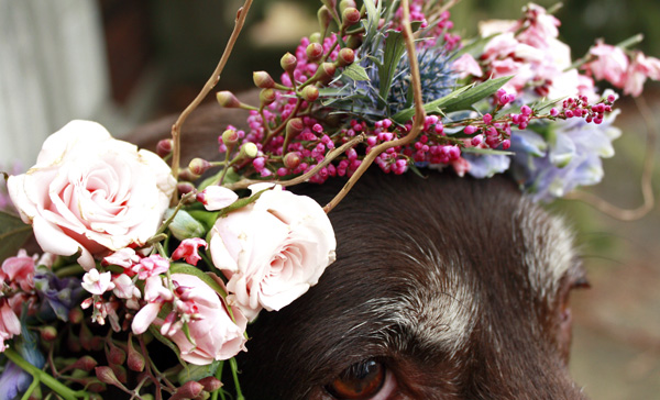 Flower Crown Chocolate Lab