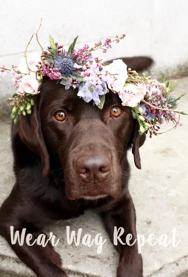 Chocolate lab flower crown