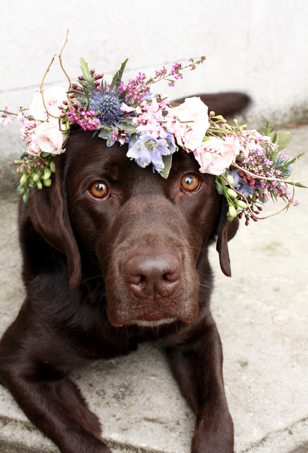 floral crown on a dog