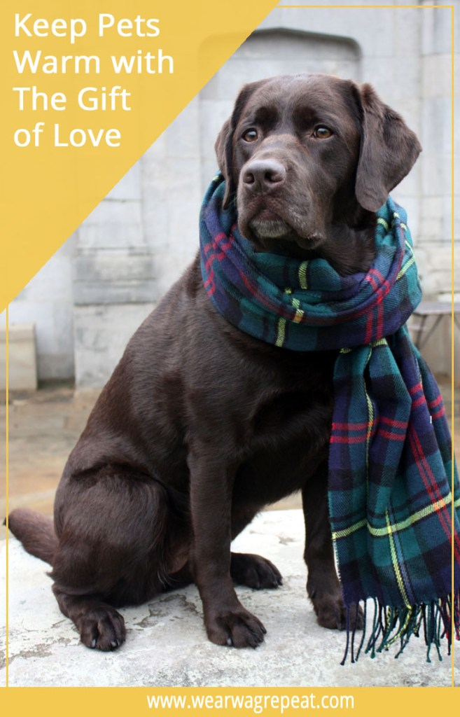 Keep Pets Warm with the Gift of Love by Donating Blankets