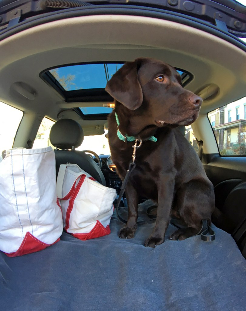 How to Plan a Winter Road Trip with Your Dog