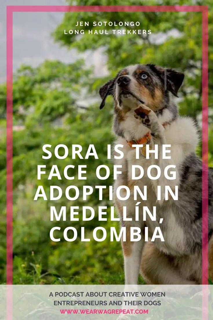 Podcast Episode 13: Jen Sotolongo of Long Haul Trekkers | Sora is the Face of Dog Adoption in Medellin, Colombia