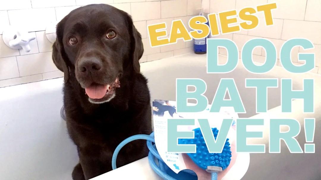 the easiest dog bath ever