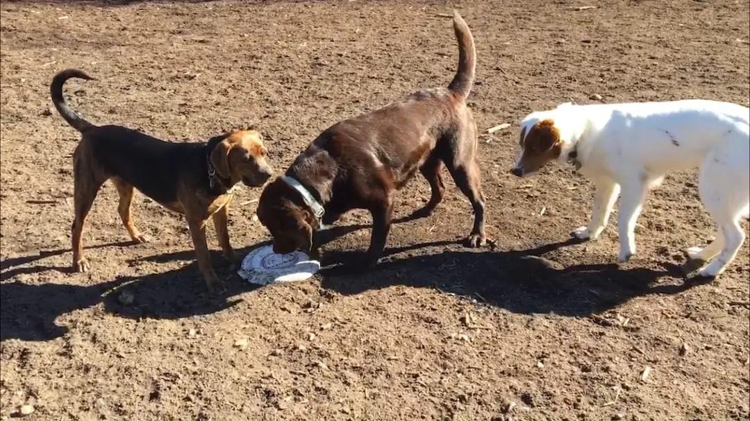 Dog Park in Asheville