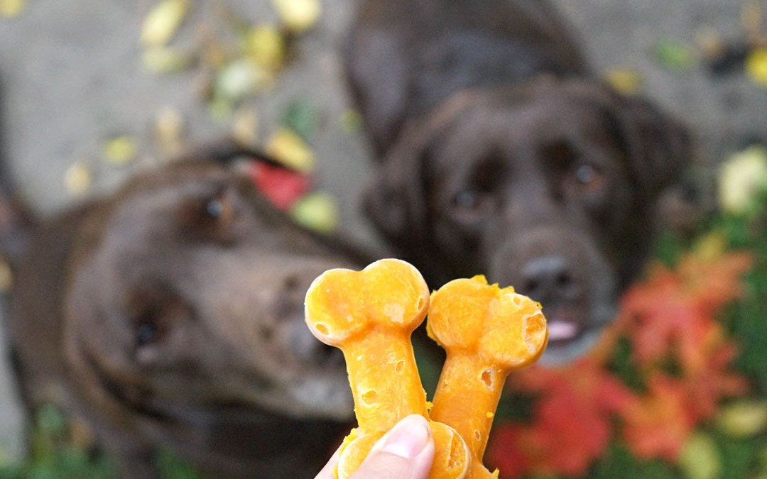 How To Make 3 Pumpkin Dog Treat Recipes