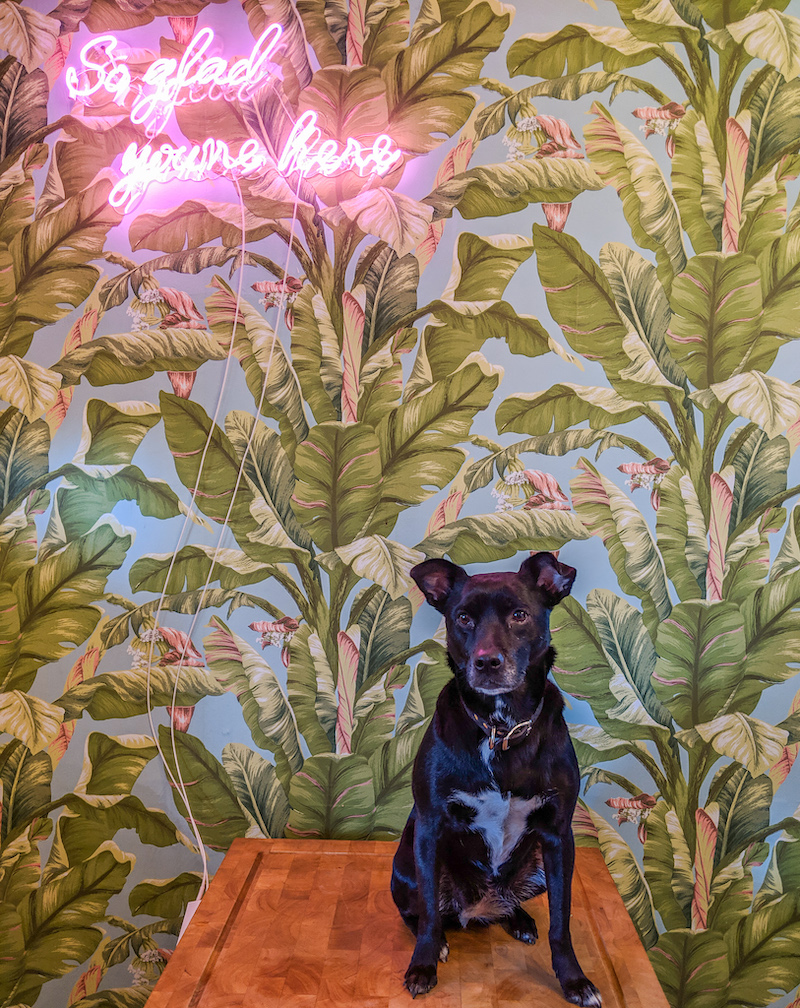 Best Dog Friendly Airbnb in Pittsburgh