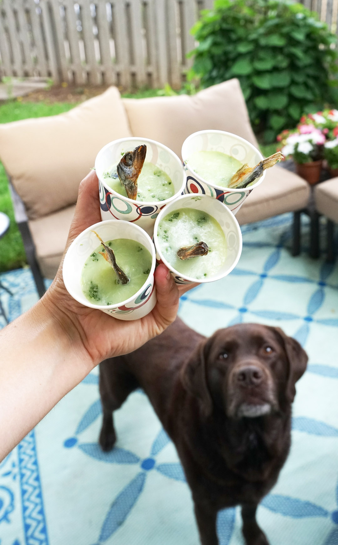 Try This: Super Healthy Goat Milk Pupsicle Recipe