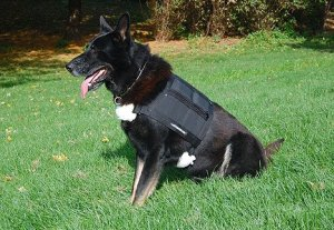 dog weight vest