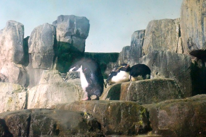 ^^The penguins! Oh my goodness, the penguins ...