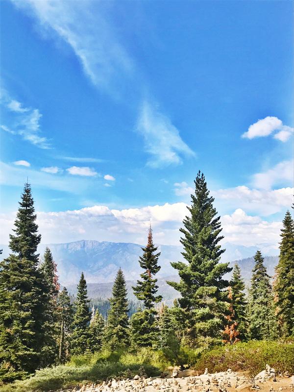 04_Sequoia
