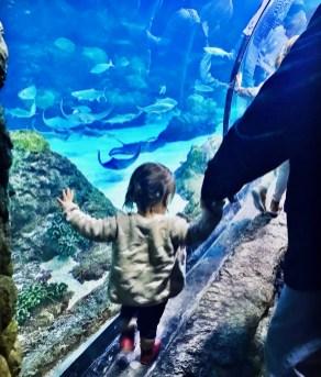 Downtown Denver Aquarium