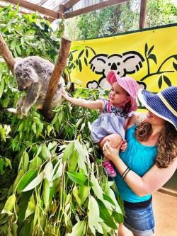 Koala Park Sanctuary, Sydney, Australia