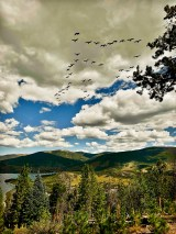 flock of birds over Sapphire Point Overlook
