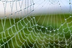 Orb web with dew drops