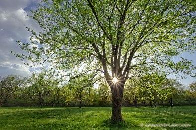 IMG_2853-sun-trees-h