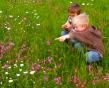 Backyard Meadow
