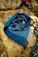 Indigo scarf snail