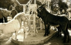 shitland-challenges-donkeys
