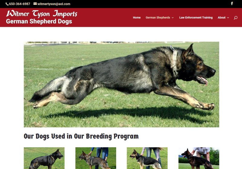 Witmer Tyson Imports Web Site