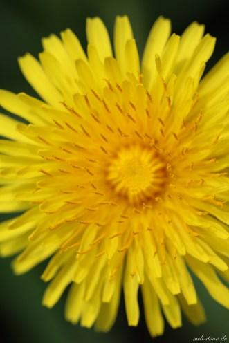 Canon EOS 100D Testbild Blume gelb