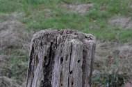 Nikon 1 V3 Testbild Beispielbild