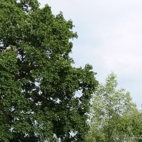 SAMSUNG NX300 Bäume