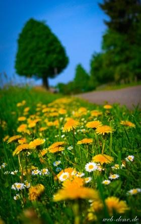 wpid-web-done.de-Yellow-Flowers-on-the-Way-_MG_6320.jpg