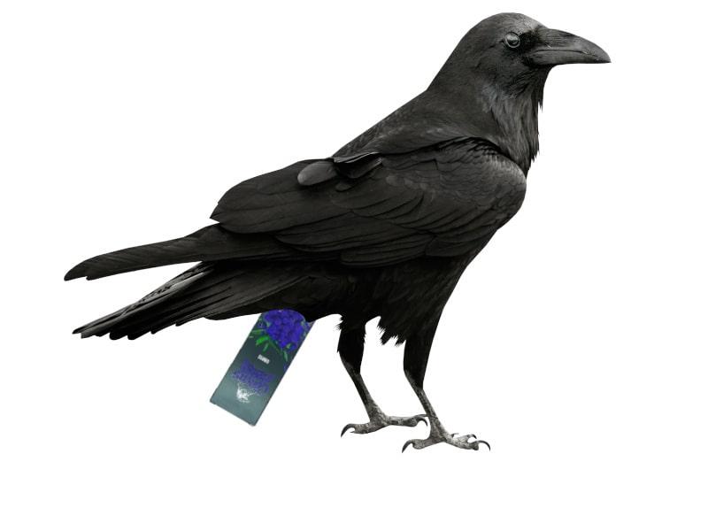 табак corvus hookah