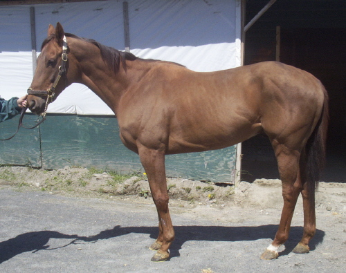 Here is Freedom's CANTER listing. He looked a lot more like himself here.