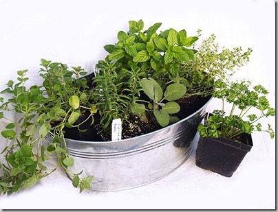 Guide to Growing Plants Indoors