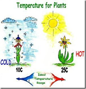 temperature_plants