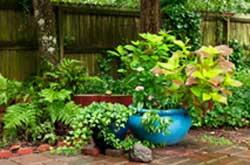 blue pot container garden