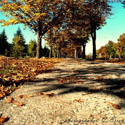 Fotoğraf: 9. sonbaharda a1 yolunu yürümek