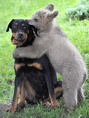 2. Dogs don't really love hugging as much as humans do.