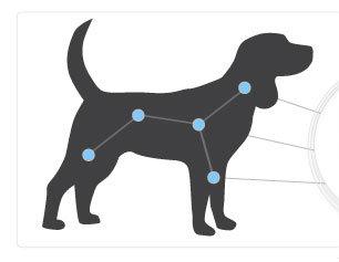 immunebalancecatdog