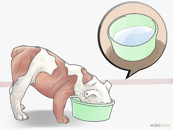 670px-Treat-Dog-Diarrhea-With-Natural-Cures-Step-2