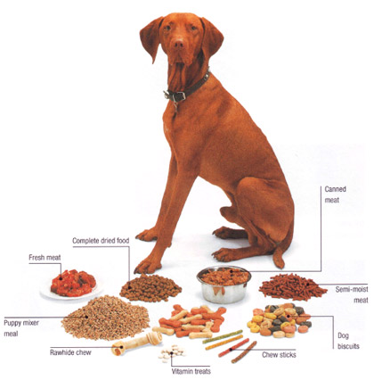 Dog-food-basics