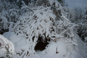 snow covered wickiup shelter