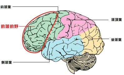 「前頭前野と前頭葉」の画像検索結果