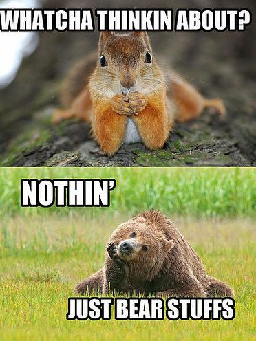 funnay_animal_pictures_2[1]