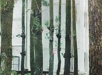 Hutan Pinus di STIE Malangkucecwara nyaman untuk belajar Outdoor