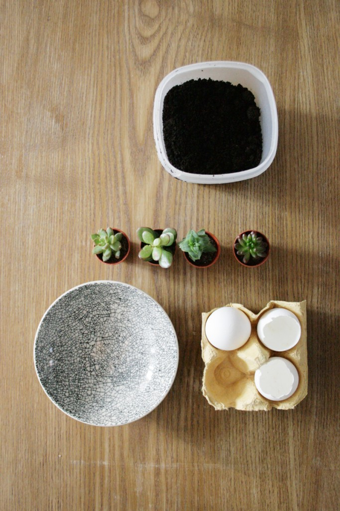 Osterdeko auf den letzten Drücker: Man nehme Eierschalen, ein bisschen Erde, Mini-Sukkulenten und ein Schälchen. Foto: Julia Marre