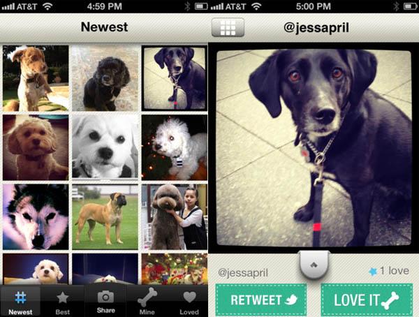 Dogsly, la red social de fotos de perros - dogsly-red-social-de-perros