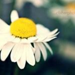 Edita una foto online con PicMonkey