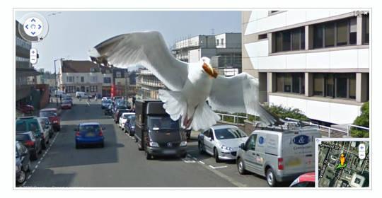 gaviota en street view Imágenes curiosas captadas en Google Street View