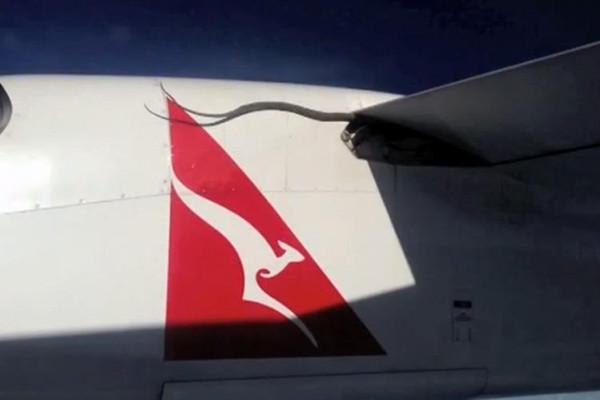 Captan video de una serpiente atrapada en avión en pleno vuelo - snake-on-a-plane