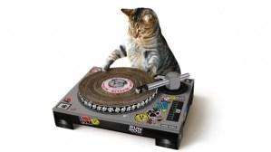Inventos tecnológicos para tu gato