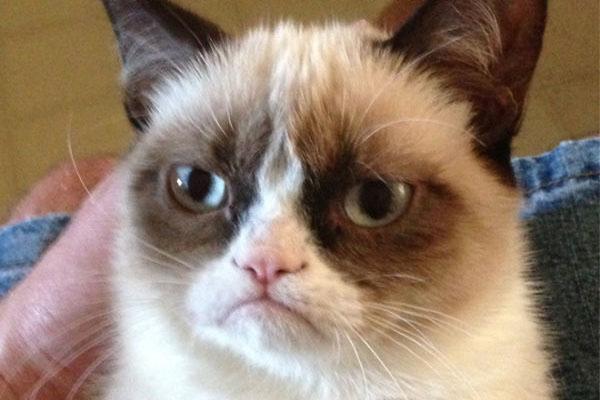 5 gatos famosos en Internet - Grumpy-cat